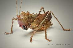 The Book of Nature: Insects Orthopteros, cricket