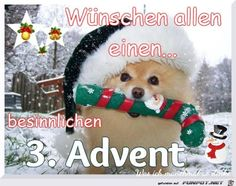 3 Advent Source by horstiblaha dog dog memes dog videos videos wallpaper dog memes dog quotes dogs dogs pictures dogs videos puppies puppy video Christmas Puppy, Christmas Animals, Merry Christmas, Christmas Time, Dog Wallpaper, Animal Wallpaper, Christmas Pictures, Panda Bear, Dogs And Puppies