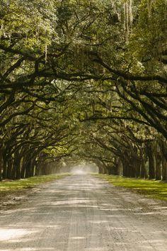 Wormsloe Plantation Road