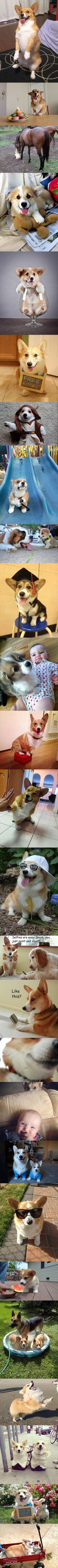 Corgis are the best…I want a corgi