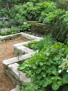 Rick Bayless, home garden, Chicago. He actually grows a good portion of the microgreens for his restaurants here. These raised beds are beautifully done. Note the espaliered apple to the left. Stone walls provide extra seating/ease of tending the plants