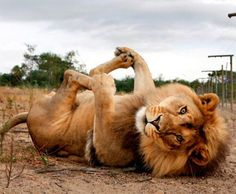 Animals That Do Yoga Better Than People, http://babepup.com/animals-yoga/