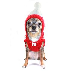 Cute dog in hooded sweater from FAB.