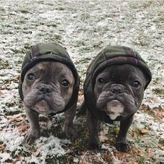 It's starting to feel a lot like winter! French Bulldogs in a fleece Hoodies