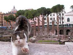 A Cat in Every Place: I gatti di Roma.
