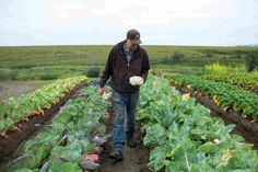 Alaska Farmer Turns Icy Patch Of Tundra Into A Breadbasket. Tim Meyers on his four-acre vegetable farm in southwestern Alaska. Behind him: an endless sea of tundra, and a glimpse of the town of Bethel. Growing Plants, Growing Vegetables, Bethel Alaska, Alaska Homestead, Homesteading In Alaska, Greenhouse Farming, Crop Over, Farming Techniques, Modern Farmer