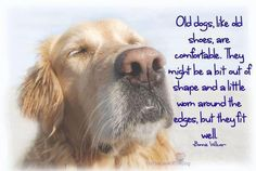 Old dogs, like old shoes are comfortable. They might be a bit out of shape and a little worn around the edges, but they fit well.