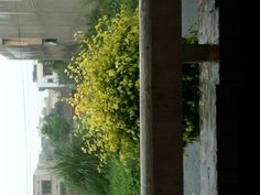 Rain !!