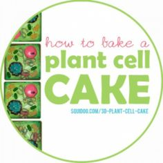 Step-by-step instructions for baking a fun, scientifically accurate plant cell cake.