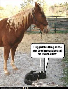 Horses and cats go together....