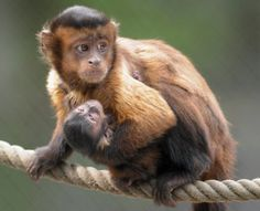 World Monkey Day Cool Facts, Cute Photos And Ways To Support These Intelligent Nonhuman Primates Baby Animals Pictures, Funny Animals, Cute Animals, Monkey Species, Types Of Monkeys, Magnificent Beasts, Baby Animals Super Cute, Paws And Claws, Cute Photos