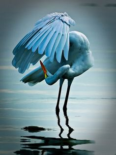 Dancing Egret by Craig ONeal Photography