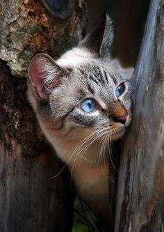 Pretty blue eyes                                                                                                                                                                                 Plus