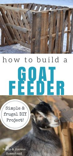 to build a goat feeder out of pallet wood. A simple and frugal DIY project.How to build a goat feeder out of pallet wood. A simple and frugal DIY project. Goat Hay Feeder, Diy Hay Feeder, Goat Playground, Playground Ideas, Goat Shelter, Goat Pen, Raising Goats, Keeping Goats, Raising Chickens
