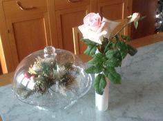 Rose d'inverno
