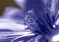 Blue details by RemoFiebig. Please Like http://fb.me/go4photos and Follow @go4fotos Thank You. :-)