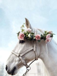 You ain't living if your house doesn't wear a flower crown Cute Horses, Pretty Horses, Horse Love, Horse Girl, Horse Photos, Horse Pictures, Most Beautiful Horses, Animals Beautiful, Cavalo Wallpaper