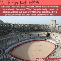 WTF Facts : funny, interesting & weird facts — The worst sports disaster Wow Facts, Wtf Fun Facts, True Facts, Funny Facts, Random Facts, Funny Humor, Trivia Facts, Strange Facts, Random Things