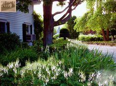 White Theme Garden in Warwick, NY - traditional - landscape - new york - Summerset Gardens/Joe Weuste