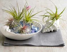 http://lethag.hubpages.com/hub/Perk-Up-The-Indoors-With-Air-Plants-Air-Plant-Design-Inspiration