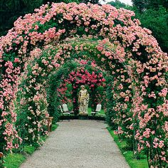 rose 'raubritter' == If we live forever in God's Paradise we will have time and health and no financial burdens.we can make our own garden idyllic. English Garden Design, Rose Garden Design, Rose Arbor, Garden Arches, Climbing Roses, Easy Garden, Garden Gates, Dream Garden, Garden Planning
