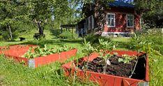 Sluta gräv i grönsakslandet –så lasagneodlar du steg för steg | Land Bokashi, Landing, Exterior, Plants, Gardening, Nirvana, Outdoors, Compost, Lawn And Garden