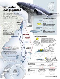 A rota das baleias (2010) | Infografia/ilustração - A rota d… | Flickr