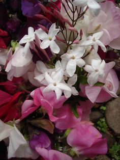 Sweet-peas and Jasmine - scent paradise Smell Good, Flower Power, Beautiful Flowers, Perfume Bottles, Fragrance, Bloom, Olie, Sweet Peas, Aromatherapy
