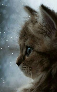 So cute! Looks like a puuurrfect winter for dis kitty