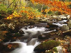 autumn in the smokey mountains | Laurel Creek in Autumn Great Smoky Mountains Tennessee wallpapers and ...