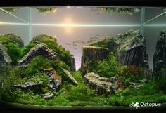 Alluring Aquascape Aquarium Designs : Ideas About Aquariums And Aquascaping On Aquascape Aquarium Designs Reef Aquarium Aquascape Designs Planted Aquarium, Aquarium Aquascape, Aquarium Terrarium, Nano Aquarium, Mini Terrarium, Aquarium Design, Fish Tank Design, Amazing Aquariums, Aquaponics