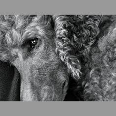 PhotoReflect - Sherri's Photographics