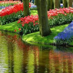 I would love to walk down a path filled with beautiful flowers and trees, and a lake so lovely