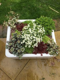Succulent planted Belfast sink - All For Garden Belfast Sink Herb Garden, Belfast Sink Garden Planter, Garden Sink, Seaside Garden, Alpine Garden, Rockery Garden, Garden Planters, Trough Planters, Succulents In Containers
