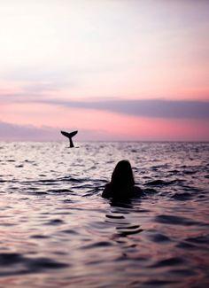 Whale, ocean silhouette