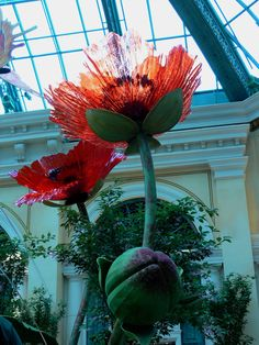 Favorite flower by my favorite glass artist......Dale Chihuly    what a cool find!  :)