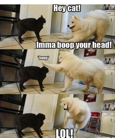 Animal humor: I know I pinned this before but I have to do it again
