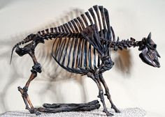 Image result for La Brea tar pit skeletons