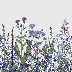 Bungalow Rose Linco Removable Field Prairie Flowers L x W Wall Mural Flower Mural, Flower Wall, Flores Wallpaper, Art Bizarre, Flor Tattoo, Wildflower Drawing, Plant Drawing, Flower Doodles, Self Adhesive Wallpaper