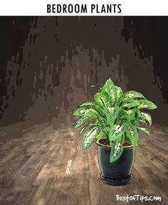 1000 ideas about plants in bedroom on pinterest. Black Bedroom Furniture Sets. Home Design Ideas