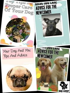 What Virtually any Dog Lover Needs To Learn #petdogs Pet Dogs, Dogs And Puppies, Pets, Dog Care Tips, Pet Care, Dog Training Tips, Your Dog, Dog Lovers, Cute Animals