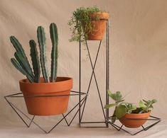 geometric plant stands                                                       …