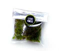 TouchUp Moss for Moss Terrarium by MossLoveTerrariums on Etsy, $5.00