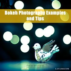 45 #Amazing Bokeh #Photography Examples and #Tips