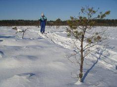 Skiing across the fozen bogs of Soomaa