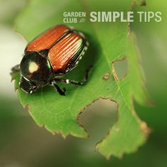 Search and Destroy: Rid the Garden of Deadly Pests Today | Garden Club