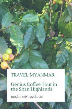 Myanmar Coffee: Genius Coffee Tour in the Shan Highlands