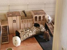 Check out our article on rabbit housing ideas! While at our site, browse our Health, care and diet section for lots of expert information on rabbit care, including life saving health info!!