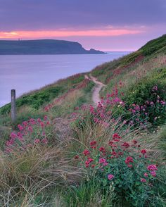 Stepper Point, North Cornwall, England on a calm hazy evening - stunning red valerian dotting up amongst the dunes. Cornwall England, Devon And Cornwall, North Cornwall, Cornwall Coast, England Uk, Beautiful World, Beautiful Places, Cottages By The Sea, Photos Voyages