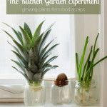The Kitchen Experiment Garden: Growing Plants from Food Scraps